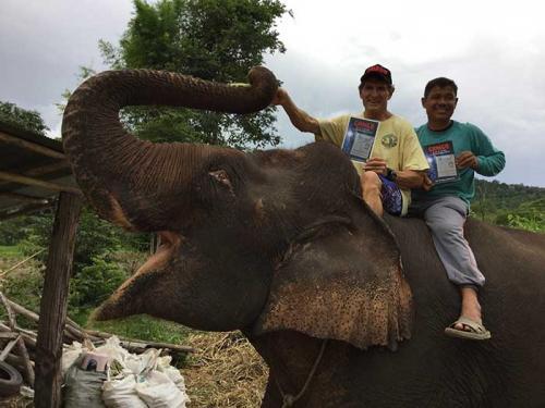 Thai elephant loves Gringo
